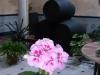 nuestro_patio_1